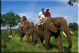Elephant-back safari, Victoria Falls, Zimbabwe