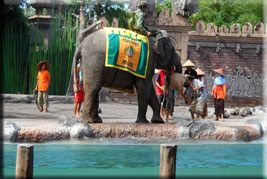 elephant-educational-show-a