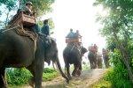 phoca_thumb_l_elephant07