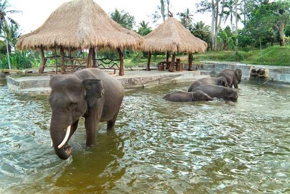 phoca_thumb_l_elephant09