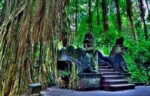 Ubud-Monkey-Forest.