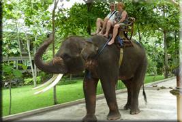 elephant-safari-park-bali-tour1