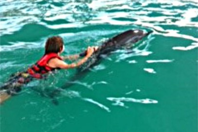 swimming-with-dolphin-bali-03
