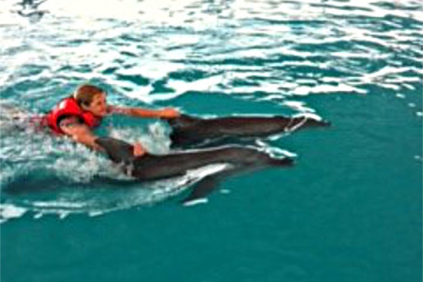 swimming-with-dolphin-bali-05