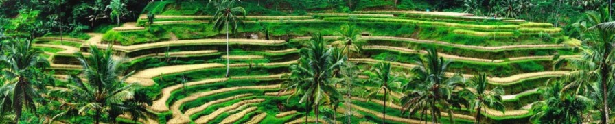 cropped-cropped-tegalalang-rice-terace-gede-bali-tour.jpg