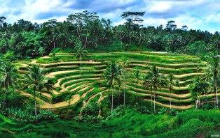Tegalalang-Rice-Terace-Gede-Bali-Tour